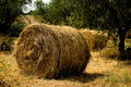 Round Hay Bails Royalty Free Stock Photography