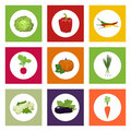 Round Icons Vegetables on Color Background