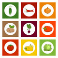 Round Icons Vegetables on Colorful Background