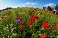Round poppy field Royalty Free Stock Photography