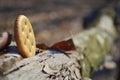 Round Salty Cracker On Nature