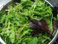 Crispy organic fresh green salad leaves