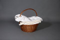 Rounded straw basket with a white handmade blanket inside gray background Royalty Free Stock Images