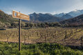 Route des vins road sign by Vineyard in Corsica Royalty Free Stock Photo