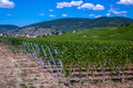 Route des vins village surrounded by vineyards in the alsace region of france at the wine Royalty Free Stock Photography