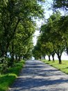 Route path between trees in a row Royalty Free Stock Photography