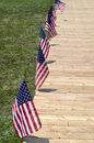 Row of american flags Stock Image