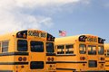 Row of American school busses, USA Royalty Free Stock Photo