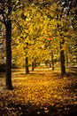 Row of Autumnal trees Royalty Free Stock Photos