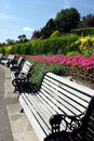 Row of benches in summery park Royalty Free Stock Images