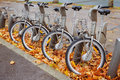 Row of bikes a for rent in paris france Royalty Free Stock Photo