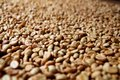 Row Boffee Beans Stock Photo