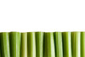 Row of celery stalks trimmed green against white Stock Image
