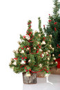 Row of christmas trees Royalty Free Stock Photos