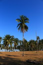 Row of coconut tree green leaf and blue sky this is sunshine ray sea thailand Royalty Free Stock Photography