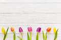 Row of colorful tulips on a wooden background in spring