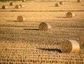 Row crops Royalty Free Stock Photo