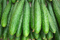 row of cucumber Royalty Free Stock Photo