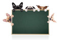 Row of dogs placard group different behind a blank banner blackboard isolated on white background Stock Photo
