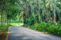 Row of expired para rubber tree and palm tree road between Stock Photos