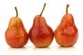 Row of fresh Bartlett Pears Royalty Free Stock Photography