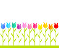 Row multicolor tulip flowers vector illustration Royalty Free Stock Photos