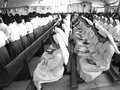 Row of nuns sitting calmly in church ubon ratchathani thailand – mar for catholic funeral priest luca santi wancha on mar Stock Photography
