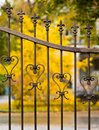 A row of old trees behind a wrought iron fence along the road. Royalty Free Stock Photo