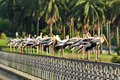 Row of Painted Storks Royalty Free Stock Image