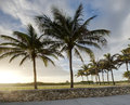 Row of Palm Trees Royalty Free Stock Photos