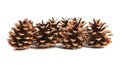 Row of pine cones close up white background Royalty Free Stock Photography