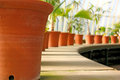 Row of plant pots Stock Photography