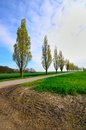 Row of poplar trees in driveway Stock Photography