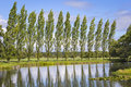 Row of poplar trees with a lake in foreground Stock Photos