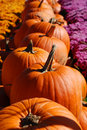Row of Pumpkins Stock Photography