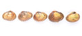 A row of raw cockle iii fresh over white background Royalty Free Stock Image