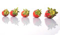 Row of strawberries fruits iv strawberry over white background Royalty Free Stock Image