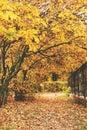 Row trees autumn yellow leaves fence Royalty Free Stock Photo