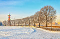 The row of the trees on Birzhevaya Old stock square. Royalty Free Stock Photo