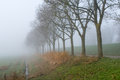Row of trees in a dense fog grassland and bare next to country road and dike very autumnal Royalty Free Stock Photo