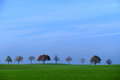 Row of trees, field with green grass, blue sky, copy space Royalty Free Stock Photo
