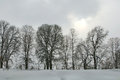 Row of trees on a snowy gray winter day with bare deciduous in germany europe Royalty Free Stock Photography