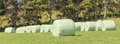 The row of white plastic wrapped silage on green farm in harvest season countryside new zealand Royalty Free Stock Photography