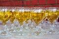Row of wine glasses Royalty Free Stock Photo