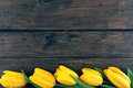 Row of yellow tulips on dark rustic wooden background.