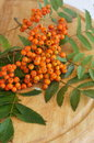 Rowan on wooden background orange berries of with green leaves Stock Photos