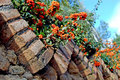 Rowanberry and bricks Royalty Free Stock Image