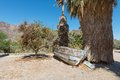 Rowboat beached and palm trees zzyzx california Stock Photo