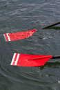 Rowing oars with red blades Stock Images
