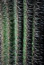 stock image of  Rows of Cactus spikes in light and shadow